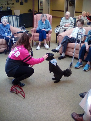 Therapy dogs NL.jpg