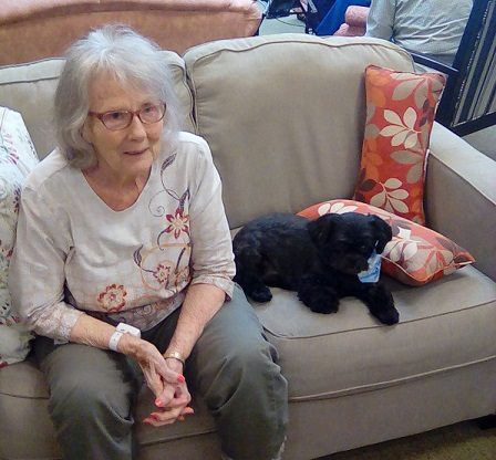 Therapy dogs NL2.jpg